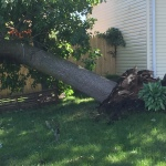 Neighbor. Luckily the tree fell the other way